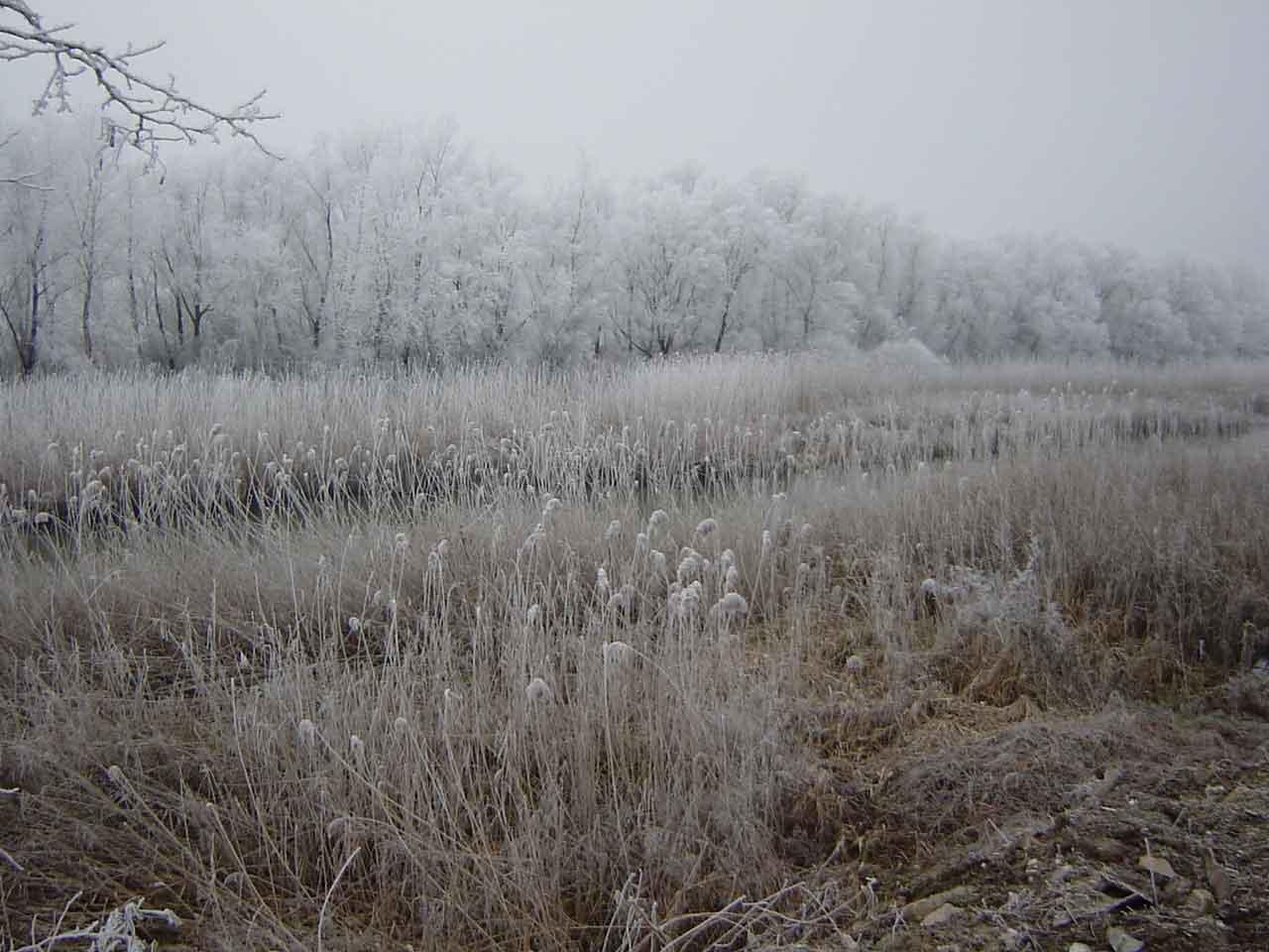 2005 Leute spezieller jugendlich Winter